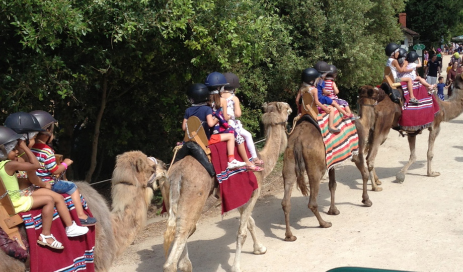 nos prestations animations animaux prestations animalires mariage oriental dromadaire chameaux chevaux poneys anes mini ferme rennes et traneaux - Location De Chameau Pour Mariage